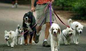 Закон о правилах выгула крупных пород собак