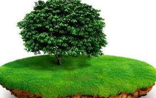 Переоформление земли в собственность 2018 пошаговая инструкция