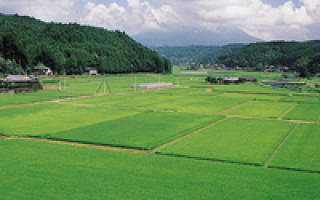 Земельный пай в колхозе